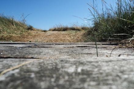 Chemin de dunes